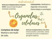 Organelas Celulares - I
