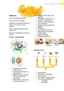 Fungos - Isabela Alves