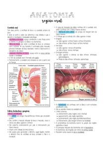 Anatomia - Cavidade oral