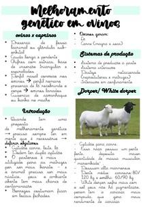 Ovinocultura - Melhoramento genetico em ovinos