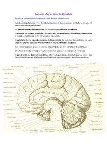 18 Anatomia Macroscópica do Diencéfalo