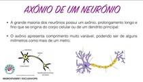 AXÔNIO DE UM NEURÔNIO