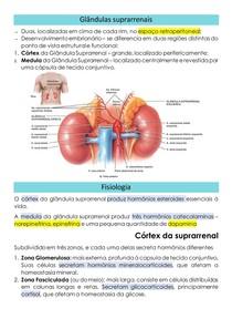 A glândula suprarrenal