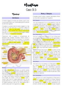 Anatomia do Duodeno, Fígado e Pâncreas