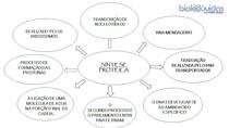 Síntese Proteica - MAPA MENTAL