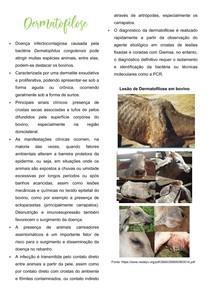 Dermatofitose x Dermatofilose em ruminantes