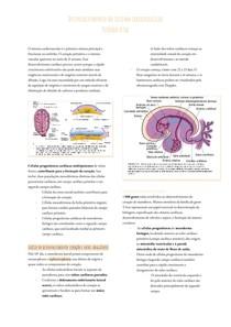 Sistema cardiovascular embriologia