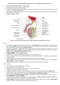 HISTOLOGIA-EMBRIOLOGIA DO SISTEMA REPROD MASCULINO-ESPERMIOGÊNESE
