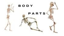 Body Parts Revisão