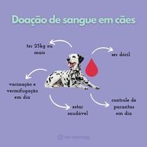 Critérios para doação de sangue em cães