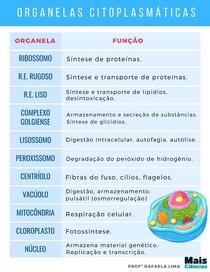 Resumo Organelas Citoplasmáticas Mais Ciências