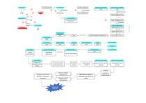 Da espermatogênese ao zigoto - Esquema
