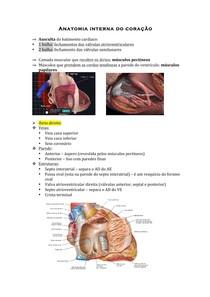 Anatomia interna do coração