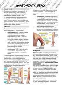 Anatomia do Braço