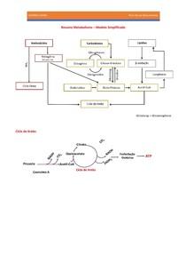 Bioquímica - metabolismo