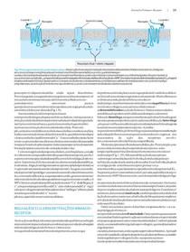 David E Golan - Princípios de Farmacologia - A Base Fisiopatológica da Farmacoterapia, 2ª Edição (Guanabara Koogan)word