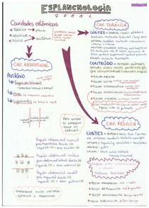 Esplancnologia e sistema nervoso