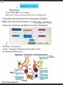 metabolismo de lipidios