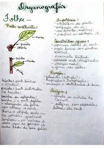 Organografia da folha