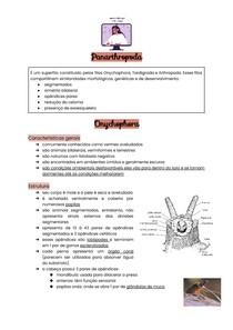 Panarthropoda - Onychophora, Tardigrada e introdução à Arthropoda