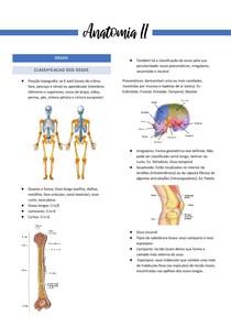 Sistema ósseo, muscular e articular