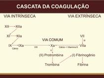CASCATA DA COAGULAÇÃO