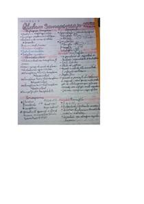células sanguíneas- fisiologia