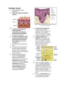Histologia da pele