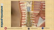 Neuroanatomia - Anatomia Prática com Dr. Wedson Vila Nova