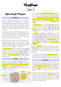 Anatomia do Sistema Genital Masculino