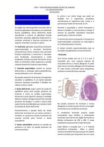 Histologia do Sistema Reprodutor Masculino