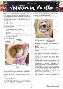 Anatomia do olho completa (inervação, irrigação, músculos, ossos)