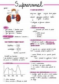 Suprarrenal (Adrenal)