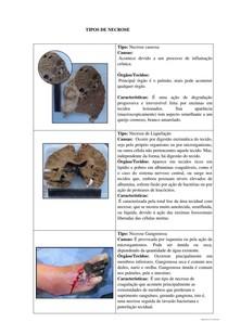 Trabalho de patologia(2)