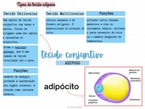 Tecido Conjuntivo Adiposo - MAPA MENTAL BÁSICO
