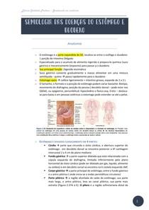Semiologia das doenças do estômago e duodeno