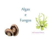 aula - fungos e algas