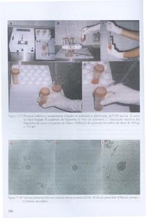 Biotécnicas aplicadas à reprodução animal 12