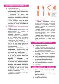 ANATOMIA- SISTEMA MUSCULAR