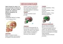 músculos-oclusão-1