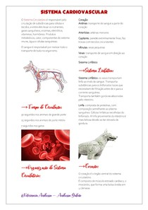 Sistema Cardiovascular - Resumo (Cão)