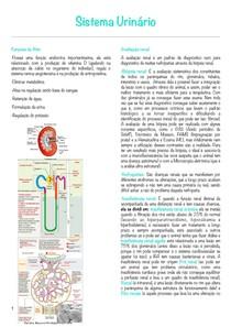 1 Sistema Urinário