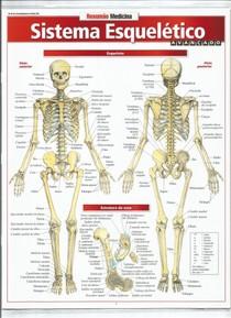 Resumo medicina  Sistema Esqueltico 01
