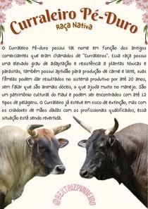 Curraleiro Pé-Duro