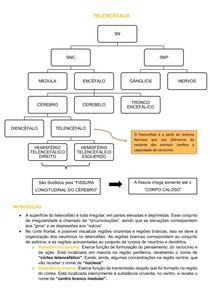 Neuroanatomia: Telencéfalo