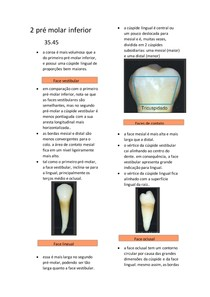 2 pré molar inferior