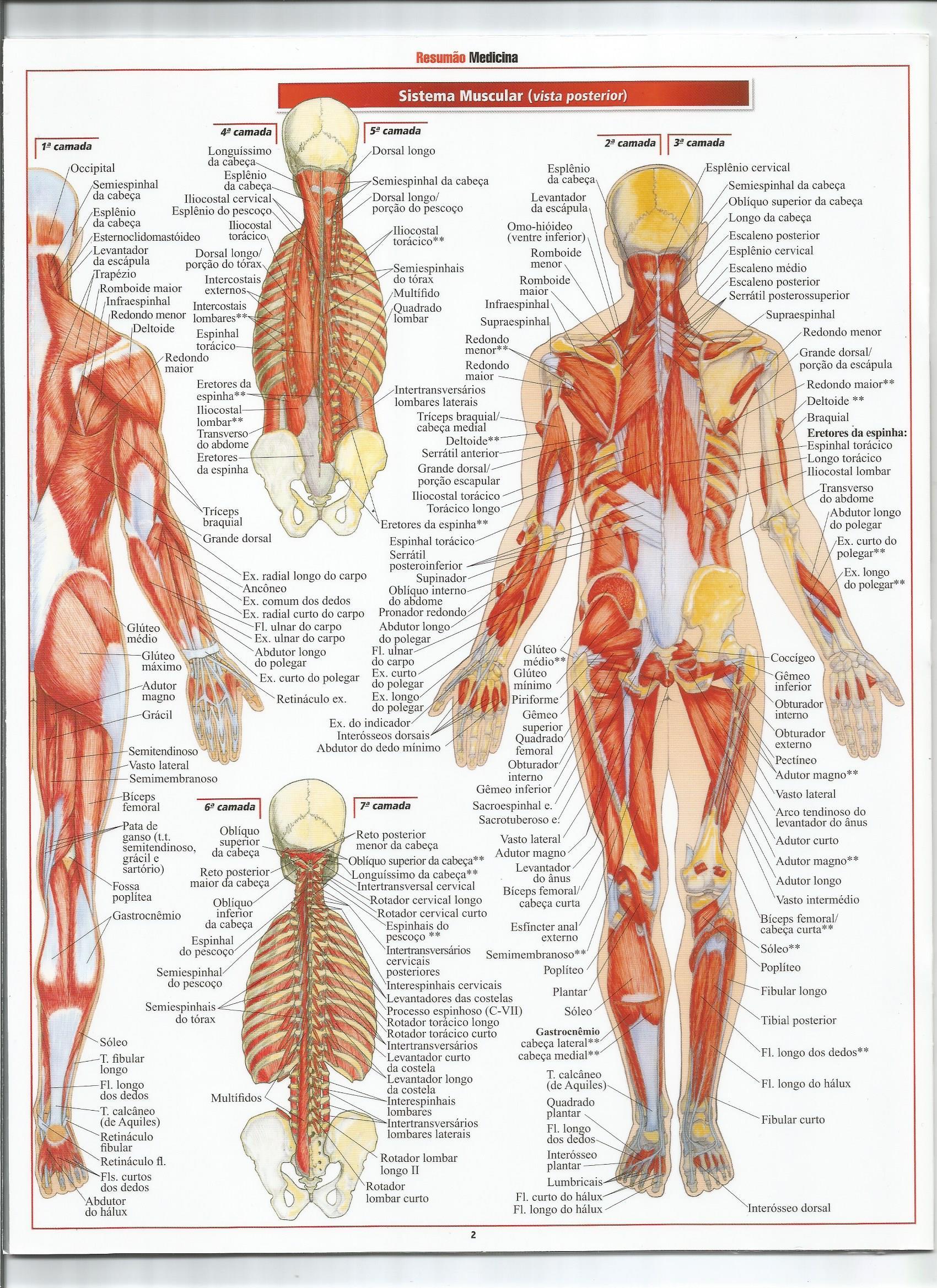 Resumão medicina - Sistema Muscular 02 - Anatomia Humana Sistê