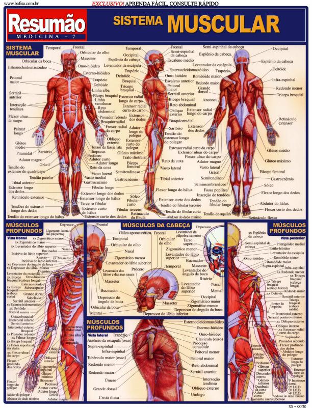 Conociendo mas sobre anatomia - 1 part 7