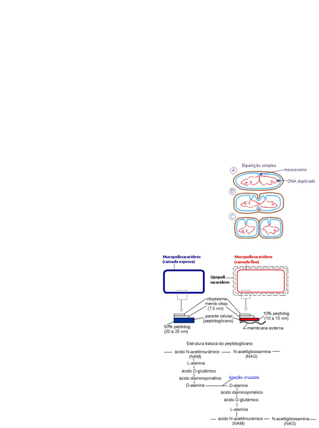 03 Célula Bacteriana Microbiologia